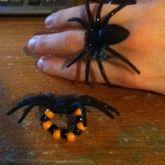 Kandi Spider Ring