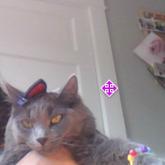 My Cat Hates Me