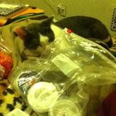 Friends Kitty Invading My Kandi Sesh From Jan 9 2015