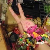 Moxie 1st 4 X Epic 3D Cuff