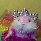 Princess Hamster