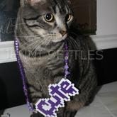 Cute Kandi Cat